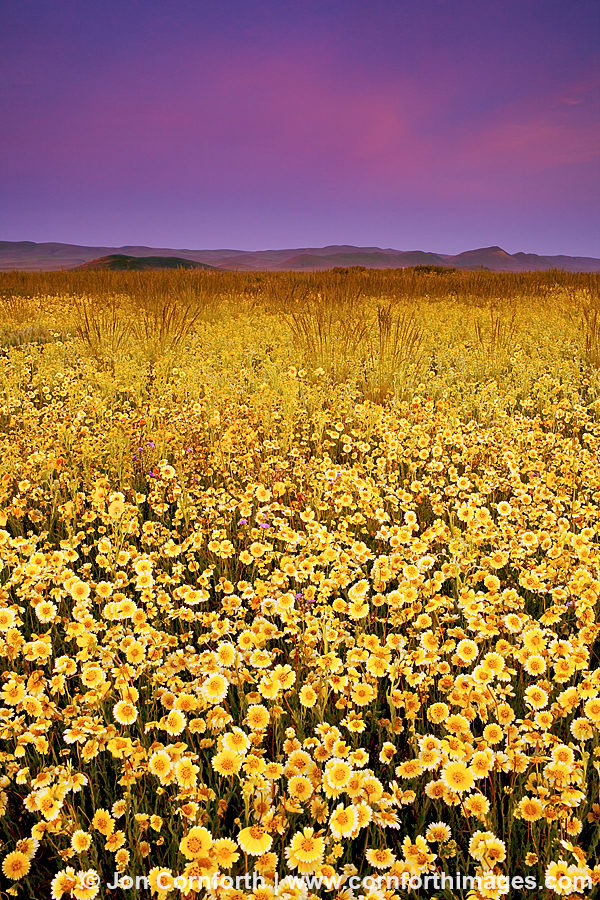 Carrizo Plain Tidy Tips Sunrise 1