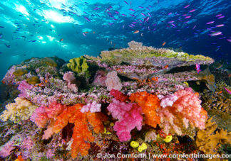 Namena Soft Corals 5