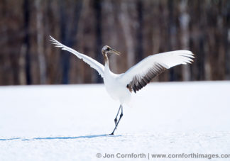 Red-Crowned Crane 31