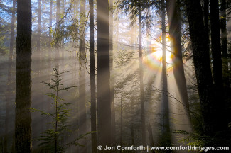 Mount Baker Forest Rays 2
