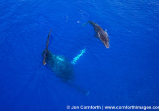 Humpback Whale Mother & Calf Aerial 5