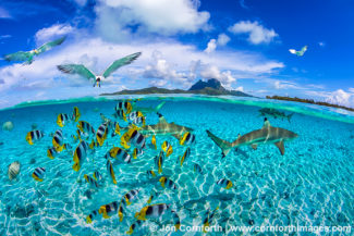 Bora Bora Blacktip Reef Sharks 6