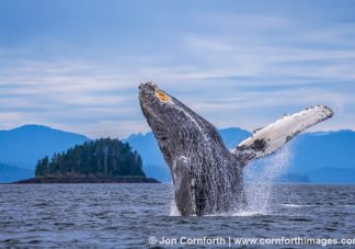 Humpback Whale Breach 301