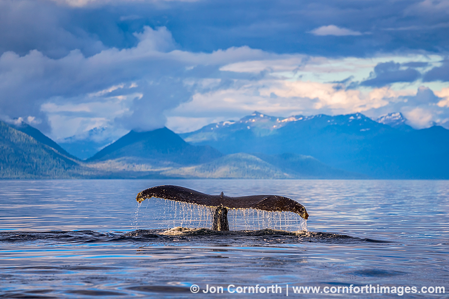 Humpback Whale Tail 201